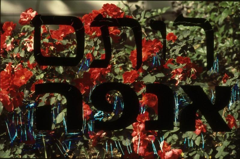 שקופית 13- 195 -ג'ש 1993-קב' אנפה