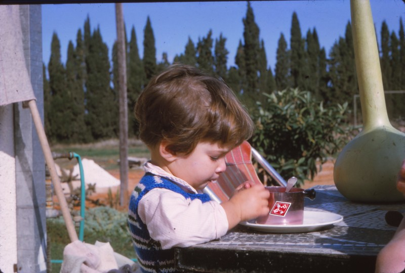שקופית 66- 367 -ג'ש 1967-נועה אלוני-ברקע-שדרת הברושים של פרדס טוקטלי