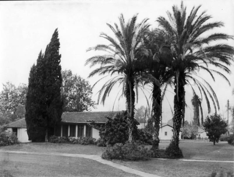 תמונה 4- 10 - בית אורי הברוש ושניים מתוך שלושת הדקלים שנות ה-80