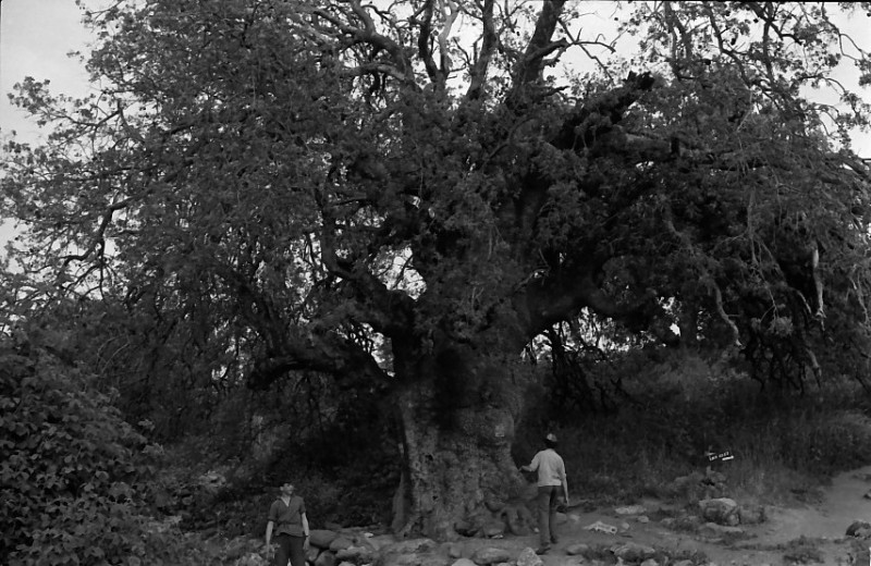 תמונה 13- 721 -ג'ש 1968-קב' שקמה-טיול לגליל