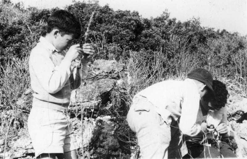 תמונה 12- 218 - קבוצת נשר מגדירים צמחים - שנות ה-40-50