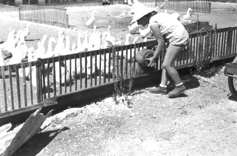 תמונה 3- 354 - מאשה יסעור מאכילה בברוזיה שנות ה-50
