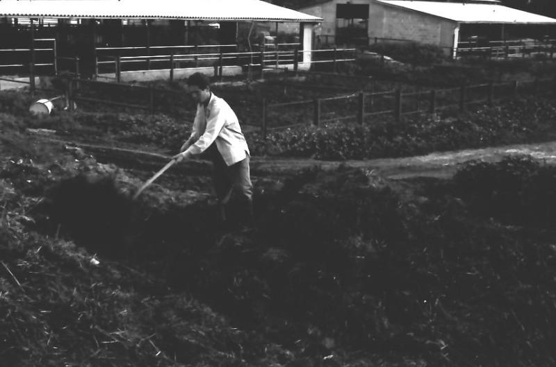 תמונה 4- 646 - ג'ש 1957-קב' ארז-עבודה ברפת-לזיהוי