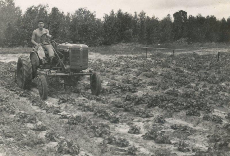 תמונה 8- 908 -ג'ש 1957-קב' ארז-אלי בכר עובד בגן הירק