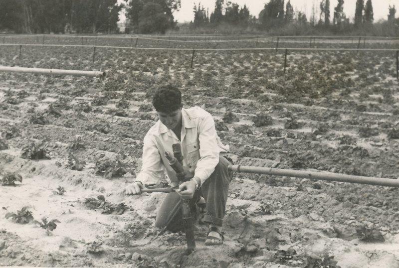 תמונה 15- 908 -ג'ש 1957-קב' ארז-יוסי רימר בגן הירק