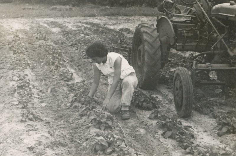 תמונה 16- 908 -ג'ש 1957-קב' ארז-אסתר שמיע בגן הירק