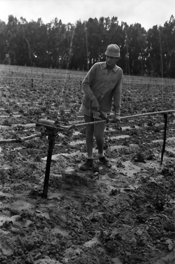 תמונה 27- 646 - ג'ש 1957-קב' ארז-בגן הירק-טפול בסקינר-מתקן השקייה