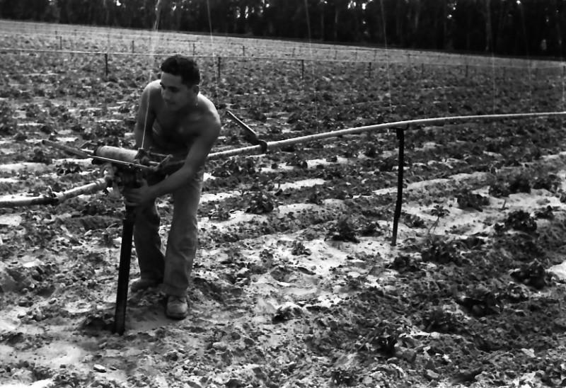 תמונה 28- 646 - ג'ש 1957-קב' ארז-בגן הירק-טפול בסקינר-מתקן השקייה