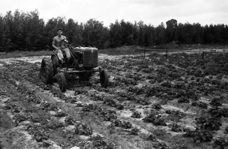 תמונה 30- 646 - ג'ש 1957-נער מקב' ארז-בגן הירק על הטרקטור פרמול-א