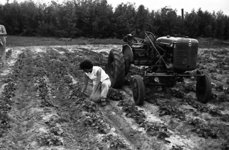 תמונה 31- 646 - ג'ש 1957-נורית-קב' ארז-בגן הירק ליד הטרקטור פרמול-א