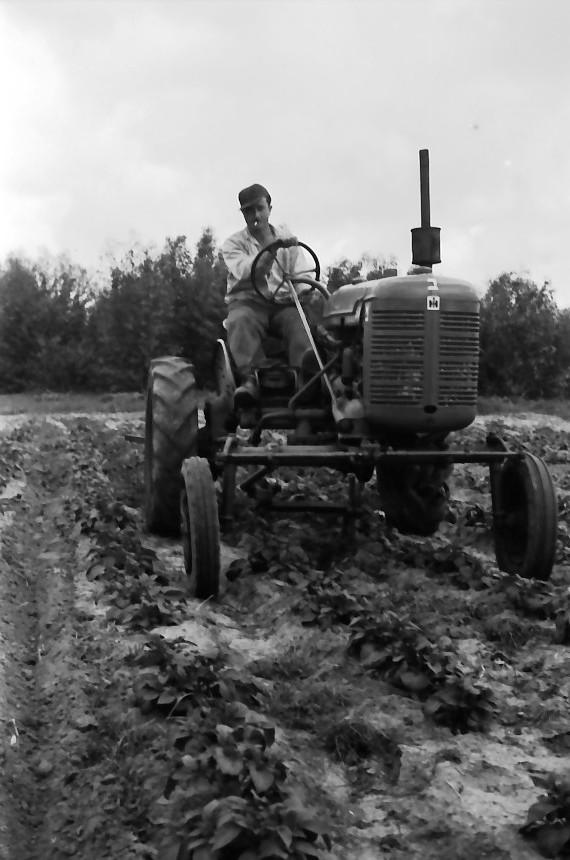 תמונה 32- 646 - ג'ש 1957-בגן הירק על הטרקטור פרמול-א'-יוסף טל