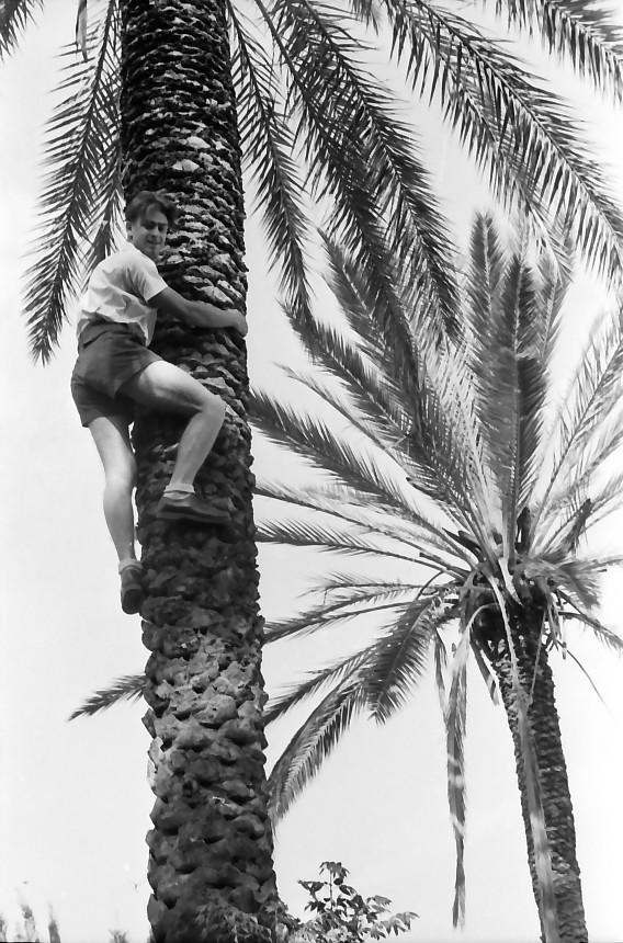 תמונה 3- 508 -גן-שמואל 1957-ישראל קב' ניצנים מטפס על דקל