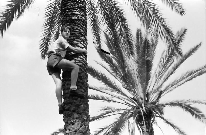 תמונה 4- 508 -גן-שמואל 1957-ישראל קב' ניצנים מטפס על דקל