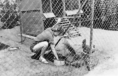 תמונה 7- 346 - לאה קראוס-כרמל מאכילה עופות במשק ילדים