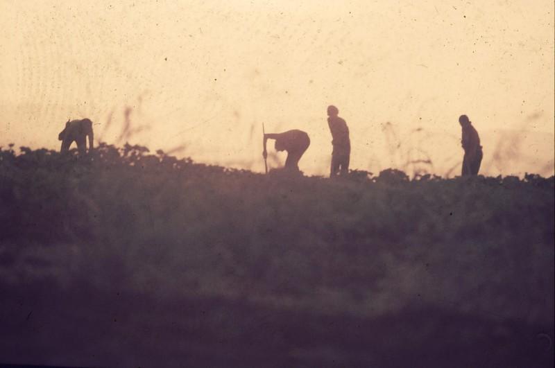 שקופית 5- 181 -ג'ש 1975-8-מוסד חינוכי-קב' להבה-עישוב כותנה