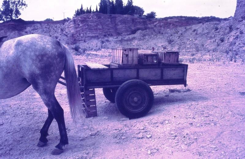 שקופית 39- 172 -ג'ש 1974-6-ילד מקב' סלע וסוס העגלה במחצבה בדמיירה