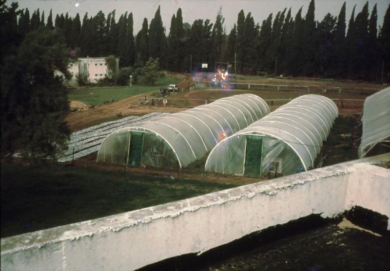 שקופית 29- 241 -ג'ש 1982-3-החממה במוסד-מכלאת הסוסים-שכון ו'-בית סיון-סקוט