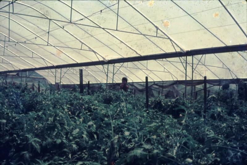 שקופית 15- 241 -ג'ש 1982-3-החממה במוסד