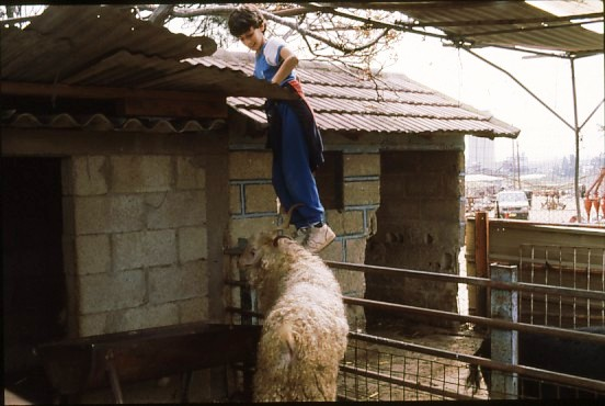שקופית 27- 49 -גן-שמואל-אורן לוי במשק ילדים קב' כוכב 1990