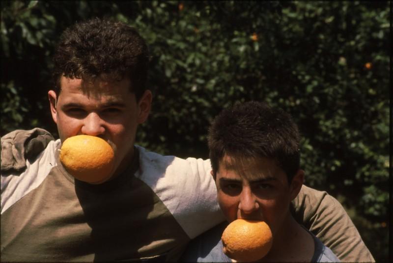 שקופית 4- 182 -ג'ש 1992-3-קטיף מוסד-בן הדר ויואב ברעם