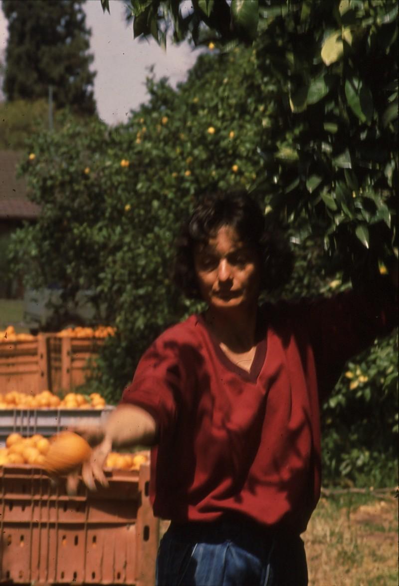 שקופית 15- 182 -ג'ש 1992-3-קטיף מוסד- נורית יגאל