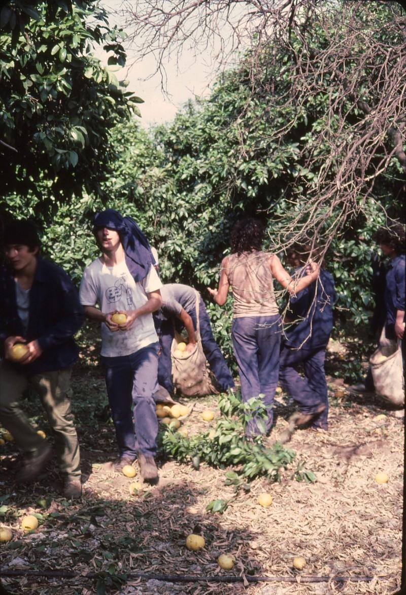 שקופית 15- 191 -ג'ש 1983-מוסד-קטיף