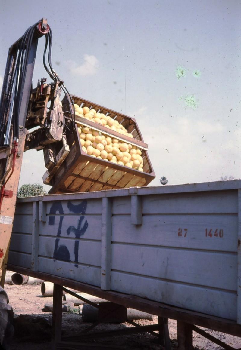 שקופית 17- 191 -ג'ש 1983-מוסד-קטיף-היפוך מיכל לגונדולה