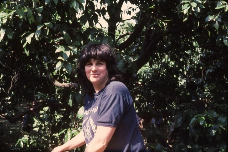 שקופית 21- 191 -ג'ש 1983-מוסד-קטיף-רינה אשכנזי