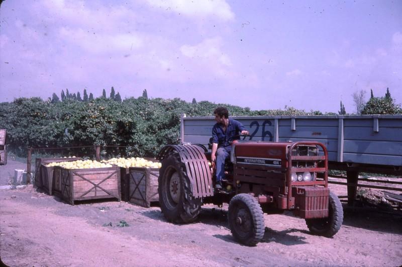 שקופית 29- 191 -ג'ש 1983-מוסד-קטיף-עומר ערמון
