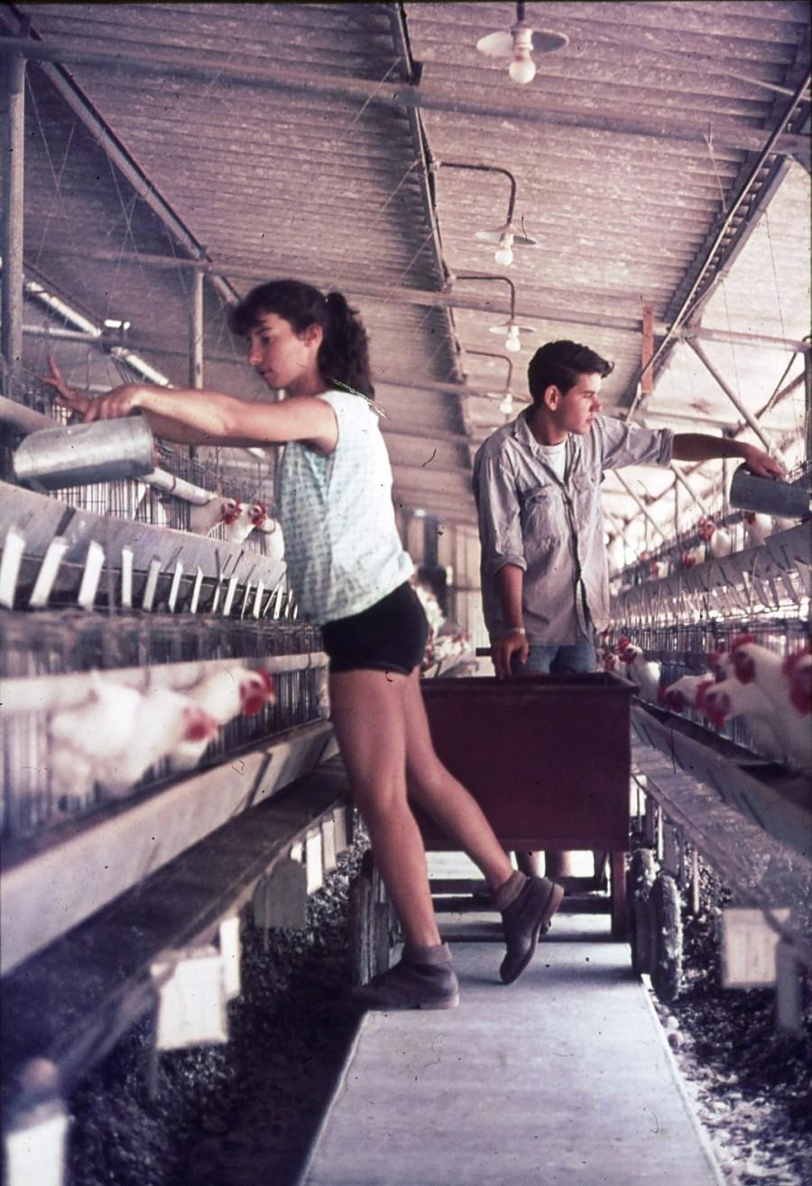 שקופית 19- 296 -ג'ש 1967-קב' חבצלת-עבודה בלול התרנגולות-חוה גייסט חנוך בראון
