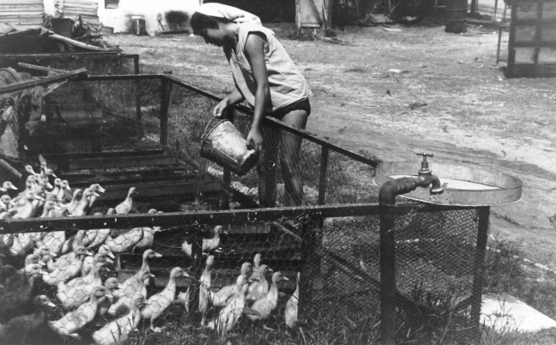 תמונה 27- 914 -גש 1953-קב שבלים-כהנה עובדת בלול