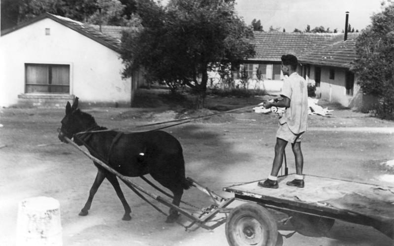 תמונה 29- 914 -גש 1953-קב שבלים-בית ה-ח (החית)-יורם חנני והעגלה רתומה לפרד