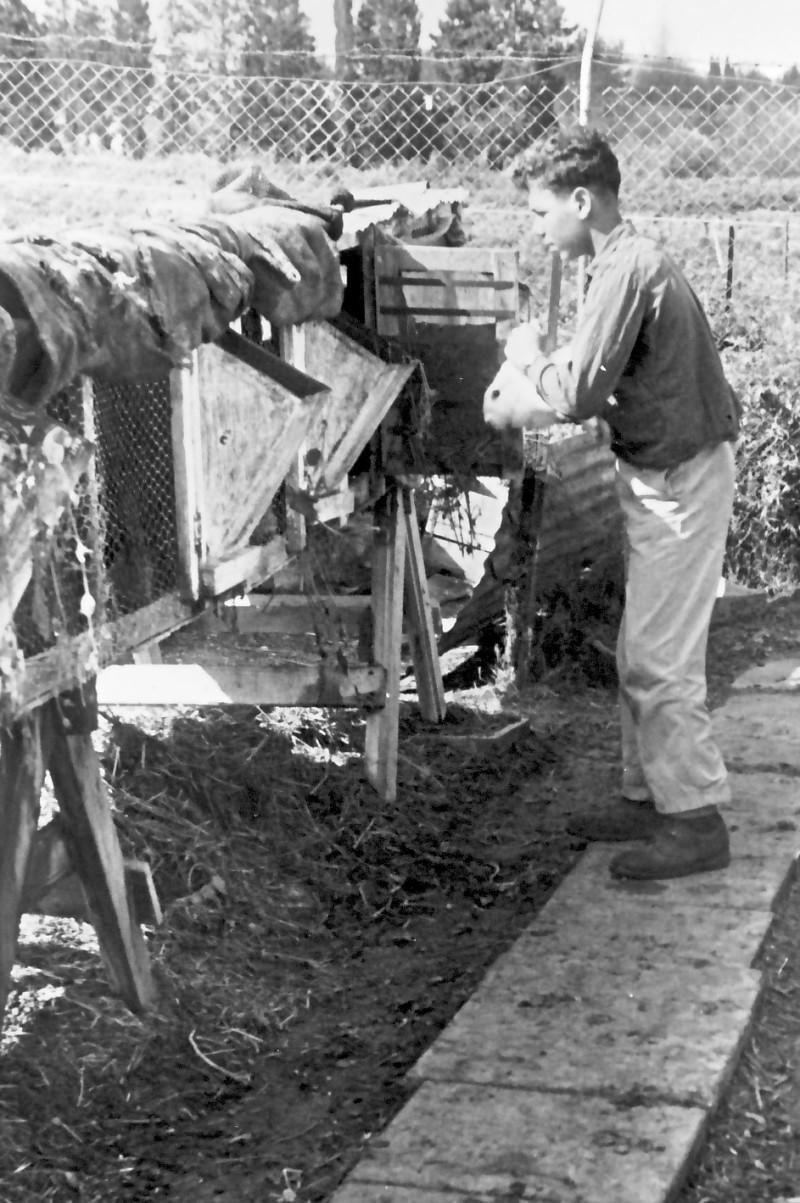 תמונה 12- 925 -גש 1956-7-קב אמיר-עם ארנבות במשק מוסד-עדי