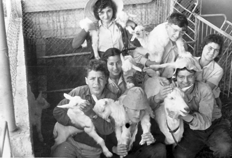 תמונה 14- 925 -ג'ש 1956-7-קב' אמיר-עם העיזים במשק מוסד-עדי כרמלה מיקה ויצמן שרה מרון יגאל פארי