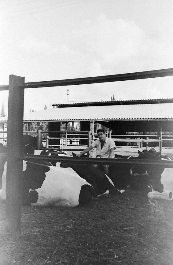 תמונה 28- 793 -ג'ש 1958-רפי אשכנזי ברפת