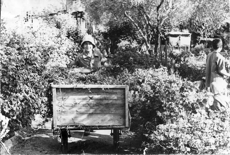 תמונה 7- 67 - יואב גלעד עובד במשק ילדים שנות ה-50