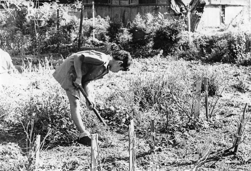 תמונה 9- 67 - אריאל זילבר עובד במשק ילדים