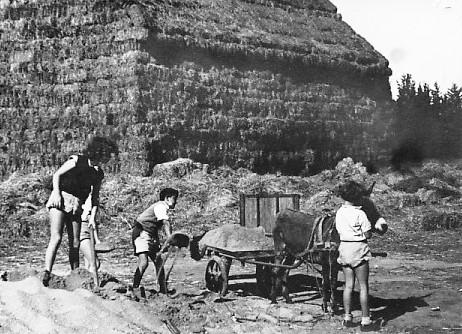 תמונה 11- 67 - ילדי אלומה ועגלה רתומה לחמור