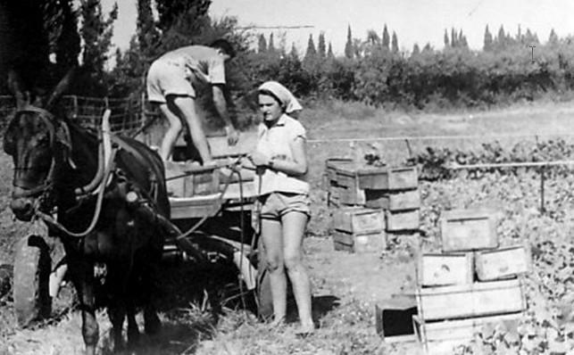 חיים שרון ולאה מעופר עובדים בגן הירק של משק מוסד.
