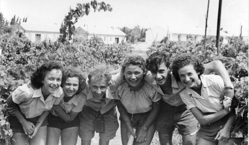תמונה 22- 121 - שיבלים בכרם-מיכצה פרדזה דוד ג. מלכה בצלאל לב
