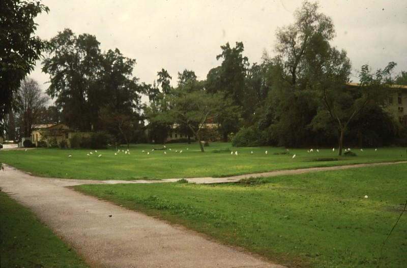 שקופית 24- 54 -ג'ש 1980-5-אנפות בדשא האשלים